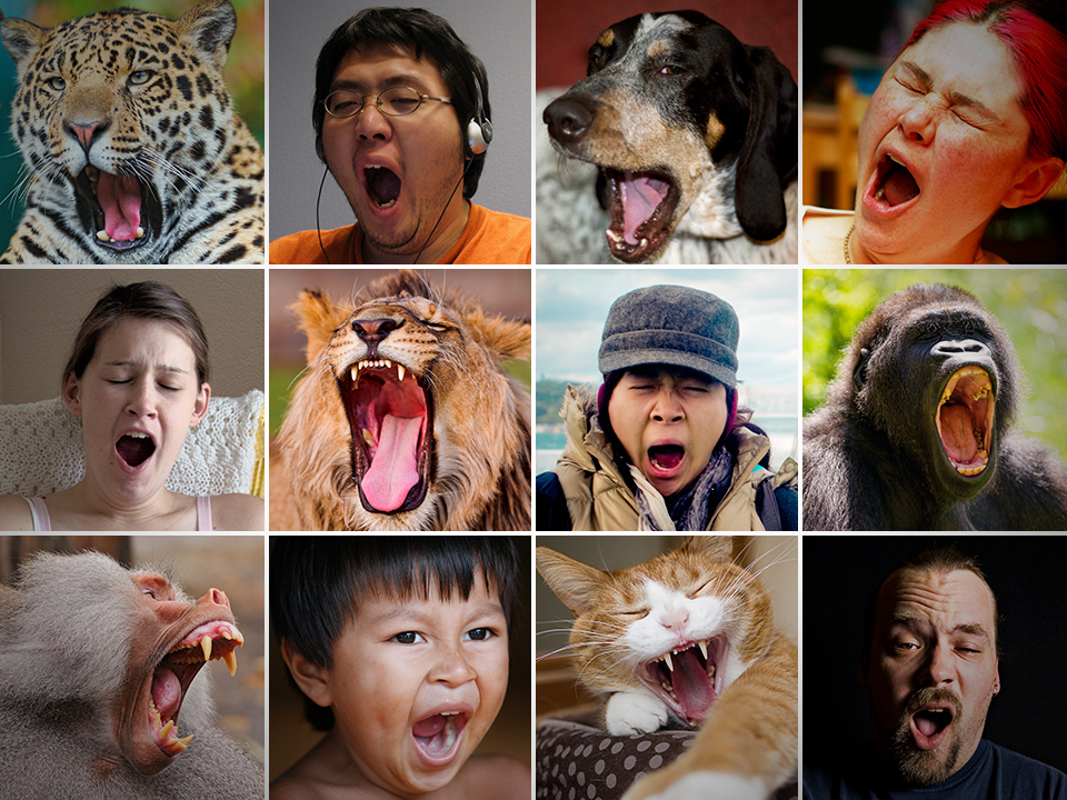 Is reading this post making you feel sleepy? Don't worry, yawn are contagious. Images credit: Flickr 1 2 3 4 5 6 7 8 9 10 11 12